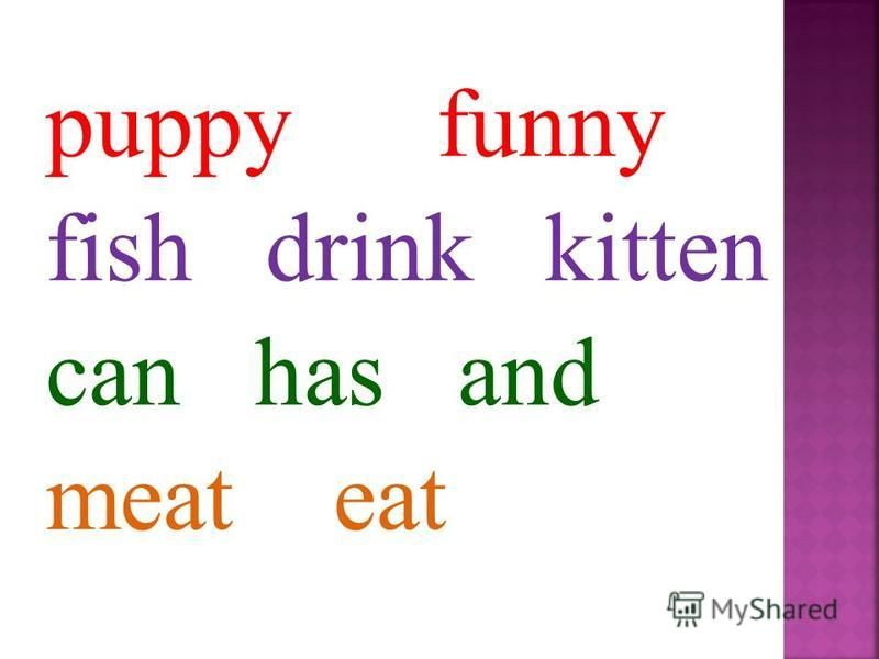 puppy funny fish drink kitten can has and meat eat