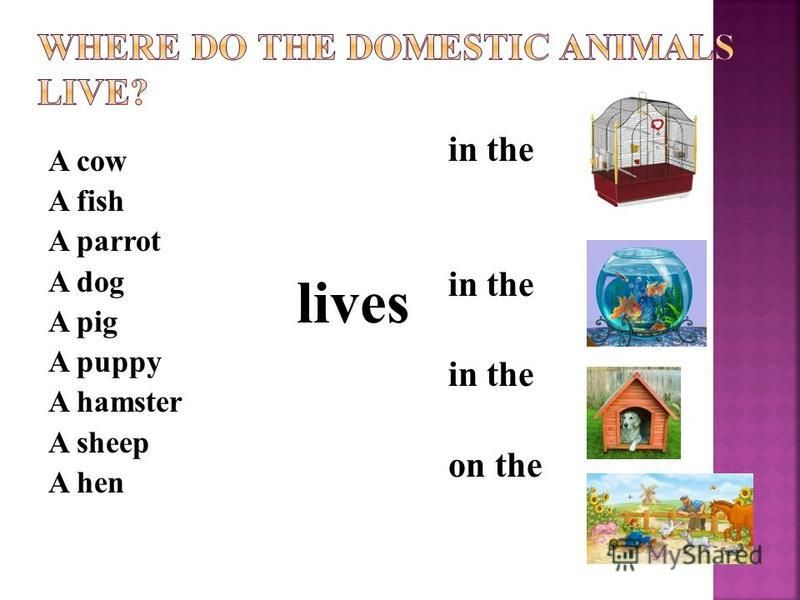 A cow A fish A parrot A dog A pig A puppy A hamster A sheep A hen in the on the lives