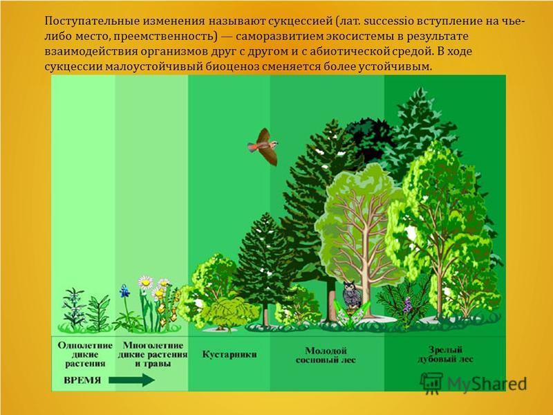 Поступательные изменения называют сукцессией (лат. successio вступление на чье- либо место, преемственность) саморазвитием экосистемы в результате взаимодействия организмов друг с другом и с абиотической средой. В ходе сукцессии малоустойчивый биоцен