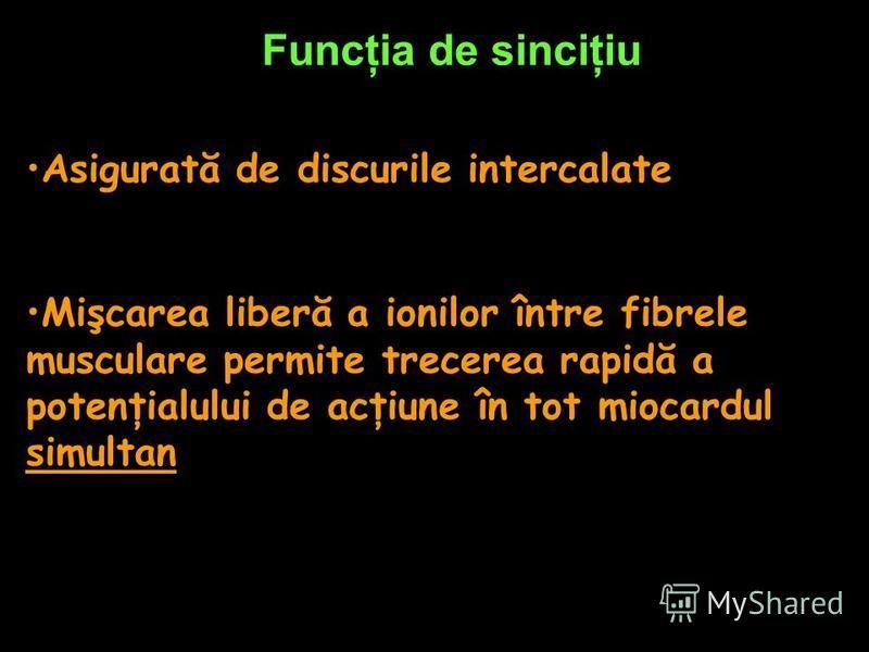 Funcţia de sinciţiu Asigurată de discurile intercalate Mişcarea liberă a ionilor între fibrele musculare permite trecerea rapidă a potenţialului de acţiune în tot miocardul simultan