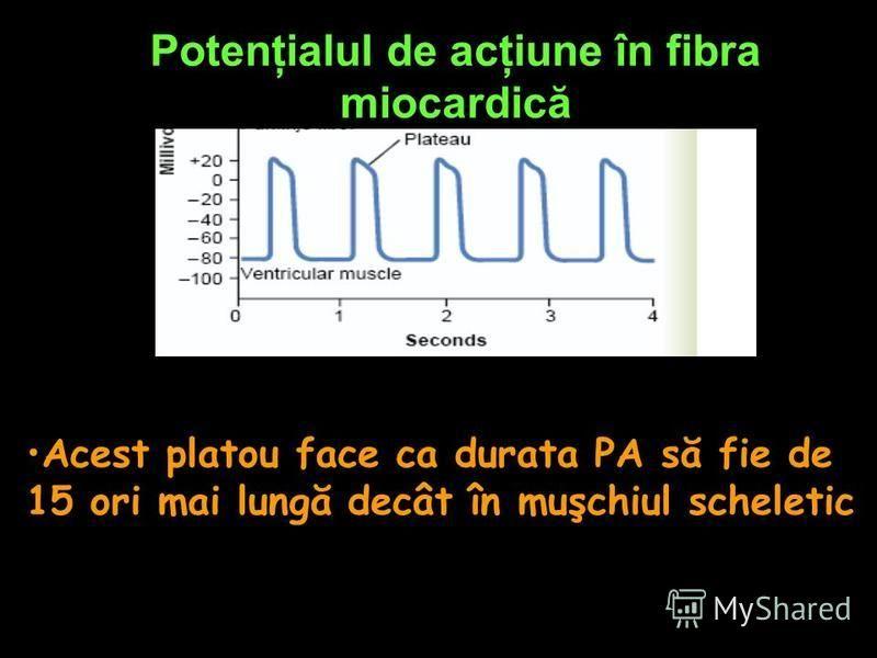 Potenţialul de acţiune în fibra miocardică Acest platou face ca durata PA să fie de 15 ori mai lungă decât în muşchiul scheletic