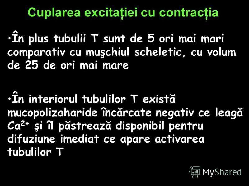 Cuplarea excitaţiei cu contracţia În plus tubulii T sunt de 5 ori mai mari comparativ cu muşchiul scheletic, cu volum de 25 de ori mai mare În interiorul tubulilor T există mucopolizaharide încărcate negativ ce leagă Ca 2+ şi îl păstrează disponibil