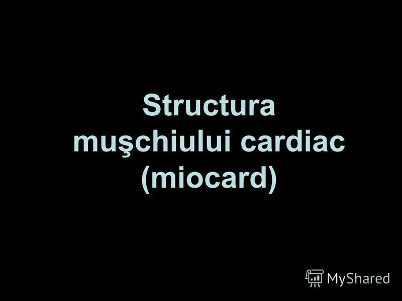 Structura muşchiului cardiac (miocard)