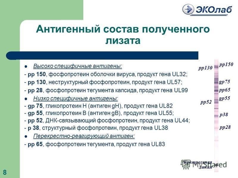 Антигенный состав полученного лизата Высоко специфичные антигены: - рр 150, фосфопротеин оболочки вируса, продукт гена UL32; - рр 130, неструктурный фосфопротеин, продукт гена UL57; - pр 28, фосфопротеин тегумента капсида, продукт гена UL99 Низко спе