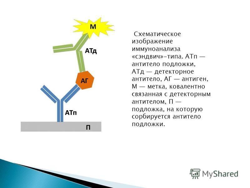 Схематическое изображение иммуноанализа «сэндвич»-типа. АТп антитело подложки, АТд детекторное антитело, АГ антиген, М метка, ковалентно связанная с детекторным антителом, П подложка, на которую сорбируется антитело подложки.