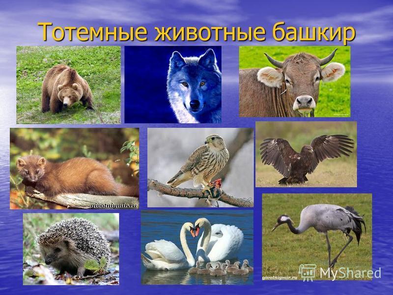 Тотемные животные башкир