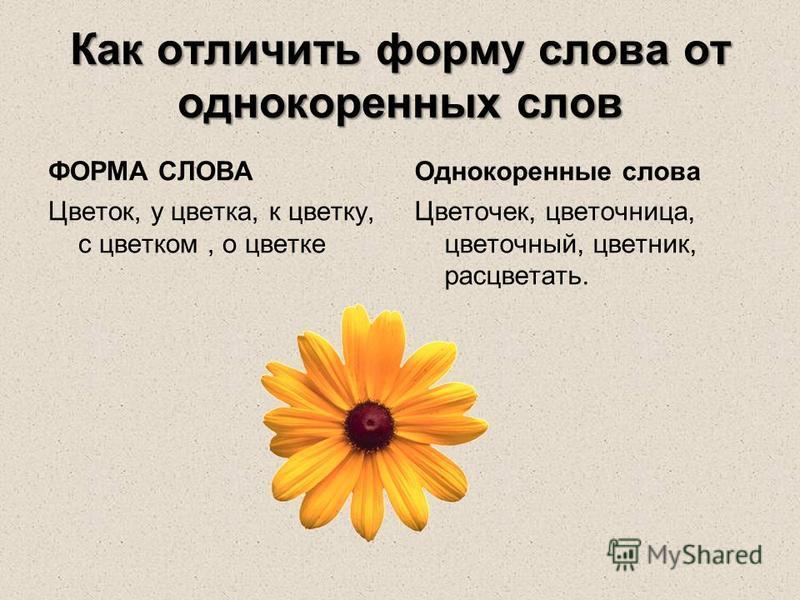 Как отличить форму слова от однокоренных слов ФОРМА СЛОВА Цветок, у цветка, к цветку, с цветком, о цветке Однокоренные слова Цветочек, цветочница, цветочный, цветник, расцветать.