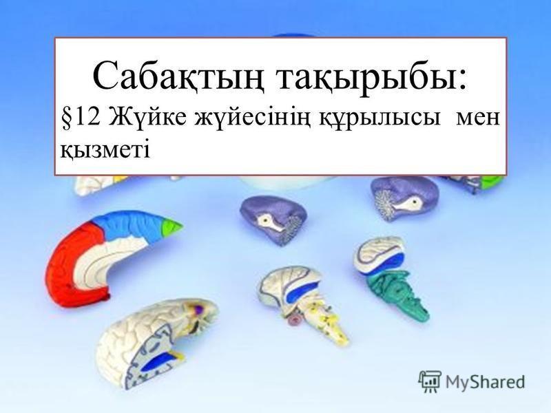 Сабақтың тақырыбы: §12 Жүйке жүйесінің құрылысы мен қызметі