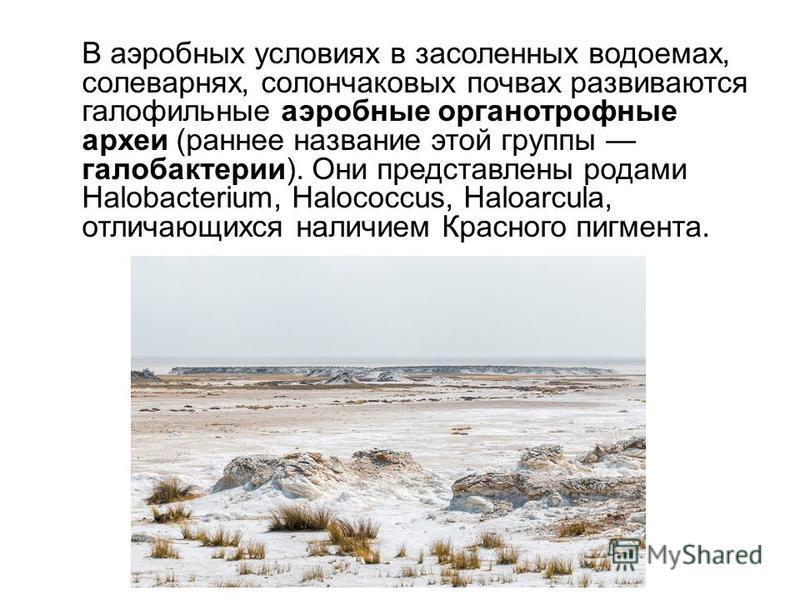 В аэробных условиях в засоленных водоемах, солеварнях, солончаковых почвах развиваются галофильные аэробные органотрофные археи (раннее название этой группы галобактерии). Они представлены родами Halobacterium, Halococcus, Haloarcula, отличающихся на