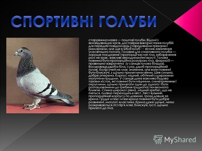 старовинна назва поштові голуби. Відомі з якнайдавніших часів, достовірне використання голубій для передачі повідомлень стародавніми греками і римлянами, але ще в Біблії голуб вісник закінчення усесвітнього потопу. Головне для спортивного голуба хоро