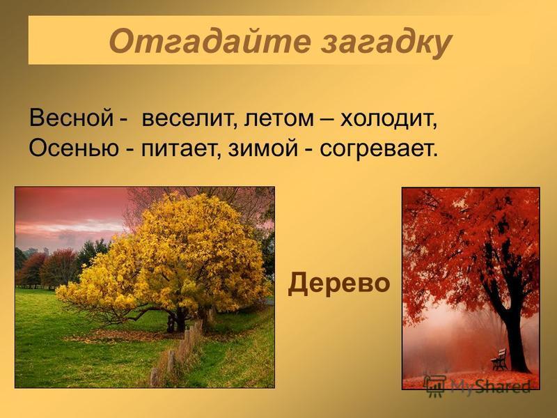 Отгадайте загадку Весной - веселит, летом – холодит, Осенью - питает, зимой - согревает. Дерево