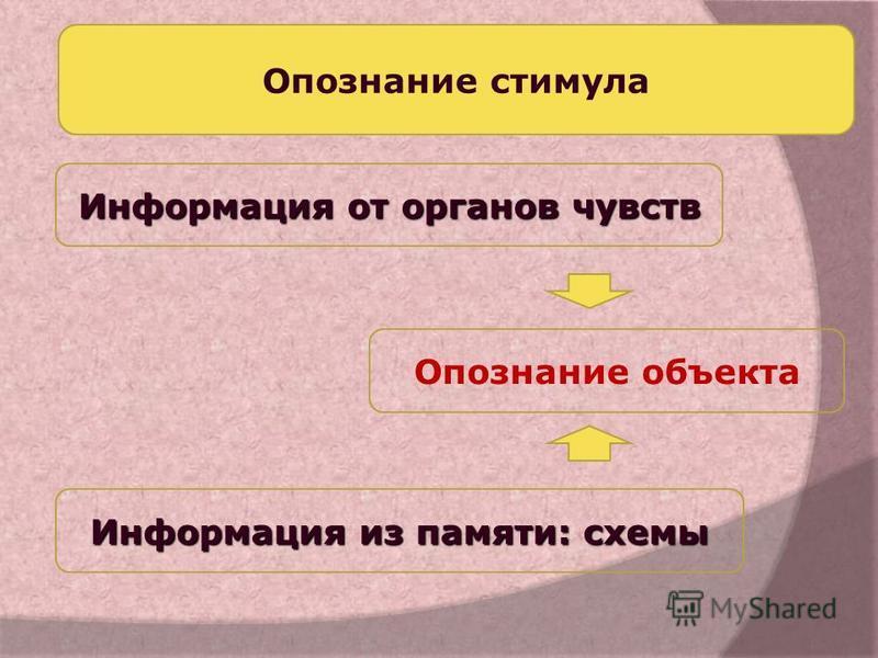 Опознание объекта Информация от органов чувств Информация из памяти: схемы Опознание стимула