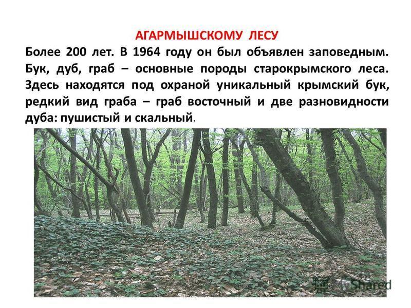 АГАРМЫШСКОМУ ЛЕСУ Более 200 лет. В 1964 году он был объявлен заповедным. Бук, дуб, граб – основные породы старокрымского леса. Здесь находятся под охраной уникальный крымский бук, редкий вид граба – граб восточный и две разновидности дуба: пушистый и
