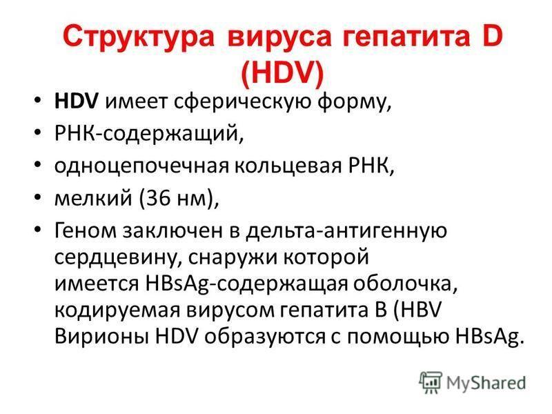 Структура вируса гепатита D (HDV) HDV имеет сферическую форму, РНК-содержащий, одноцепочечная кольцевая РНК, мелкий (36 нм), Геном заключен в дельта-антигенную сердцевину, снаружи которой имеется HBsAg-содержащая оболочка, кодируемая вирусом гепатита