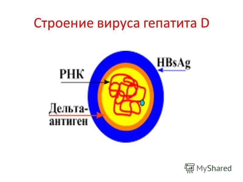 Строение вируса гепатита D