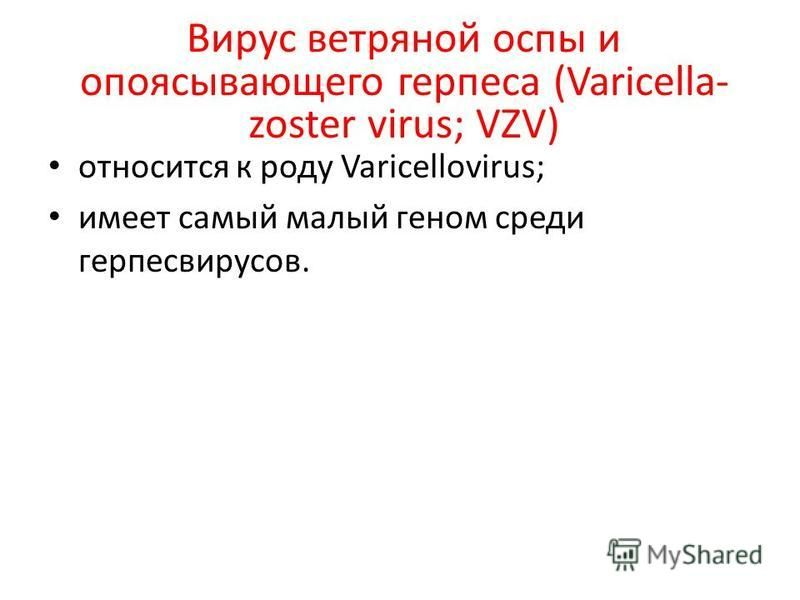 Вирус ветряной оспы и опоясывающего герпеса (Varicella- zoster virus; VZV) относится к роду Varicellovirus; имеет самый малый геном среди герпесвирусов.