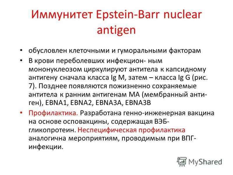 Иммунитет Epstein-Barr nuclear antigen обусловлен клеточными и гуморальными факторам В крови переболевших инфекцион- ным мононуклеозом циркулируют антитела к капсидному антигену сначала класса Ig М, затем – класса Ig G (рис. 7). Позднее появляются по