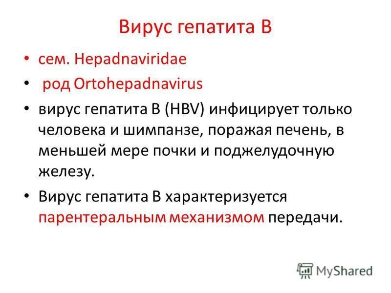 Вирус гепатита В сем. Hepadnaviridae род Ortohepadnavirus вирус гепатита B (HBV) инфицирует только человека и шимпанзе, поражая печень, в меньшей мере почки и поджелудочную железу. Вирус гепатита B характеризуется парентеральным механизмом передачи.
