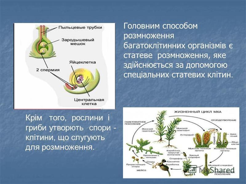 На сьогодні це означення Р. Вірхова можна вважати біологічним законом. «Розмноження клітин прокаріотичних та еукаріо- тичних відбувається лише шляхом ділення вихідної клі- тини, якому передує відтворення ії генетичного матеріалу.» Одноклітинні органі