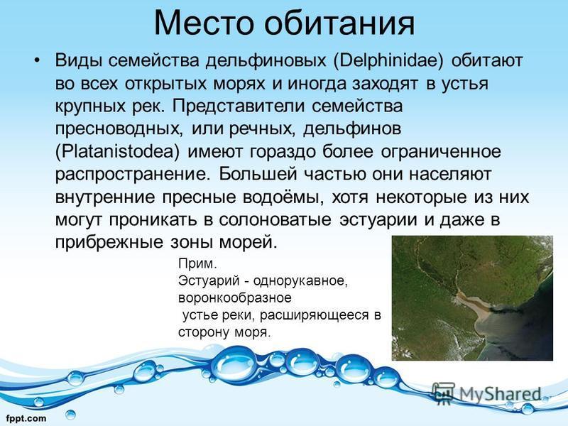 Место обитания Виды семейства дельфиновых (Delphinidae) обитают во всех открытых морях и иногда заходят в устья крупных рек. Представители семейства пресноводных, или речных, дельфинов (Platanistodea) имеют гораздо более ограниченное распространение.