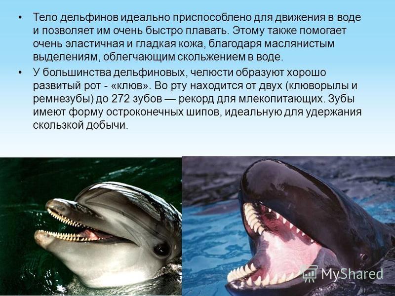 Тело дельфинов идеально приспособлено для движения в воде и позволяет им очень быстро плавать. Этому также помогает очень эластичная и гладкая кожа, благодаря маслянистым выделениям, облегчающим скольжением в воде. У большинства дельфиновых, челюсти