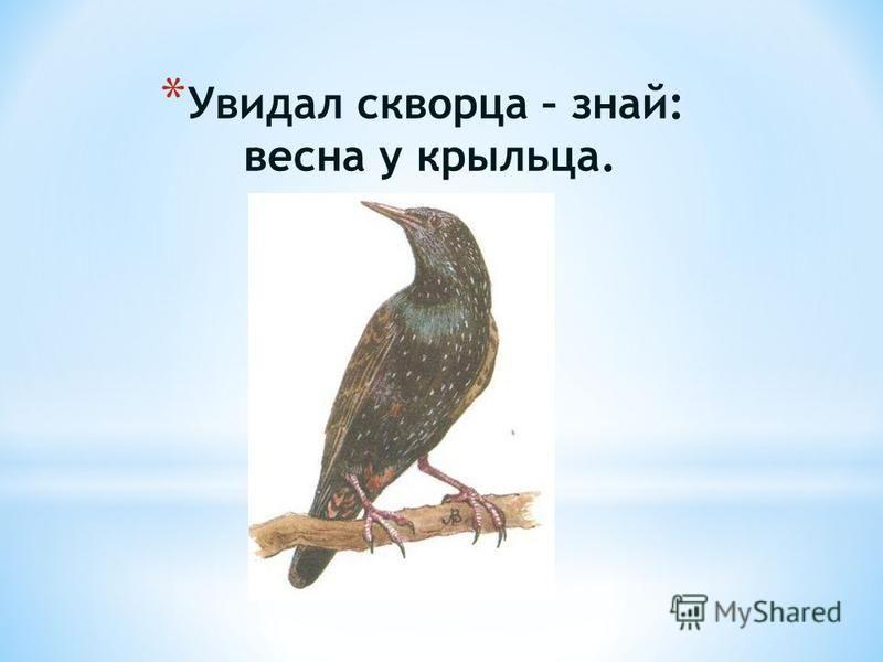 * Увидал скворца – знай: весна у крыльца.