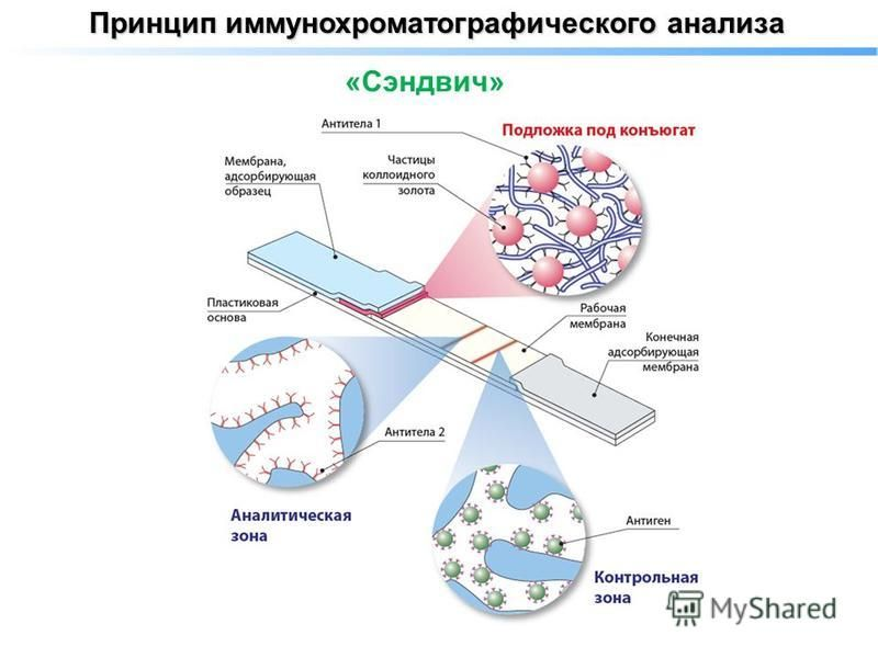 Принцип иммунохроматографического анализа «Сэндвич»