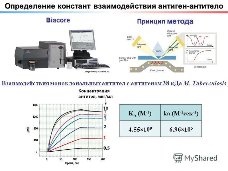Определение констант взаимодействия антиген-антитело Biacore Принцип метода Взаимодействия моноклональных антител с антигеном 38 к Да M. Tuberculosis K A (M -1 )ka (M -1 сек -1 ) 4.55×10 9 6.96×10 5