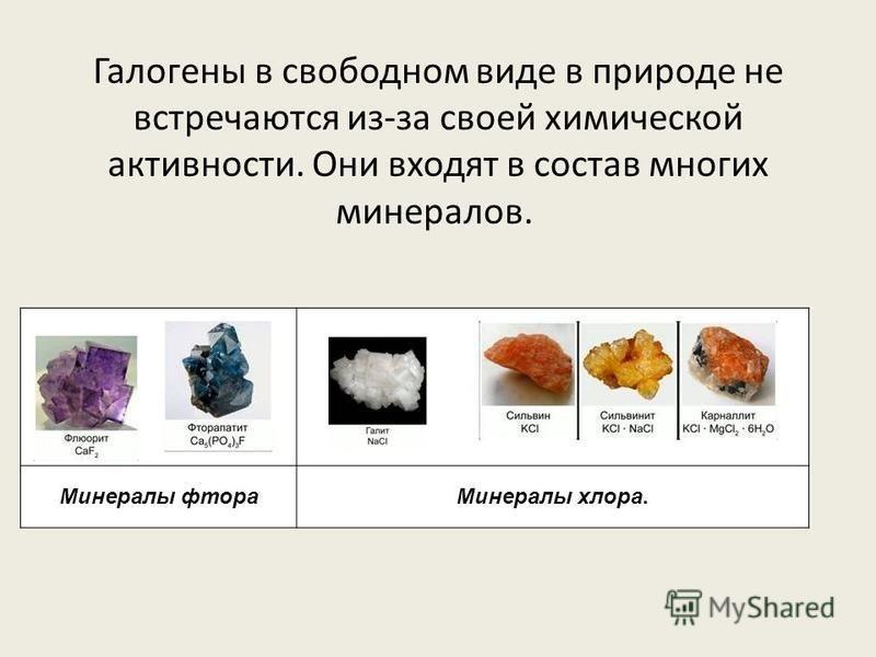 Галогены в свободном виде в природе не встречаются из-за своей химической активности. Они входят в состав многих минералов. Минералы фтора Минералы хлора.