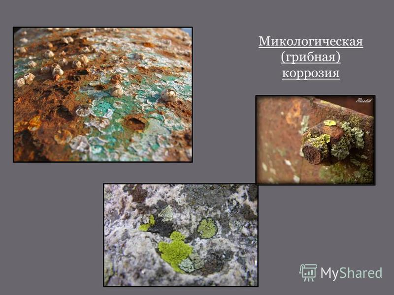 Микологическая (грибная) коррозия