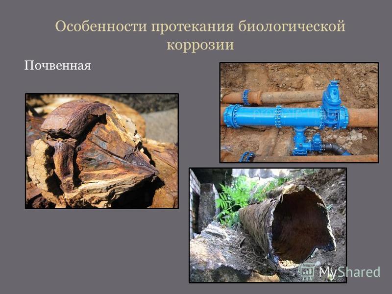 Особенности протекания биологической коррозии Почвенная