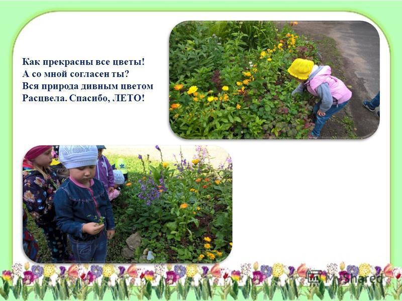 Как прекрасны все цветы! А со мной согласен ты? Вся природа дивным цветом Расцвела. Спасибо, ЛЕТО!