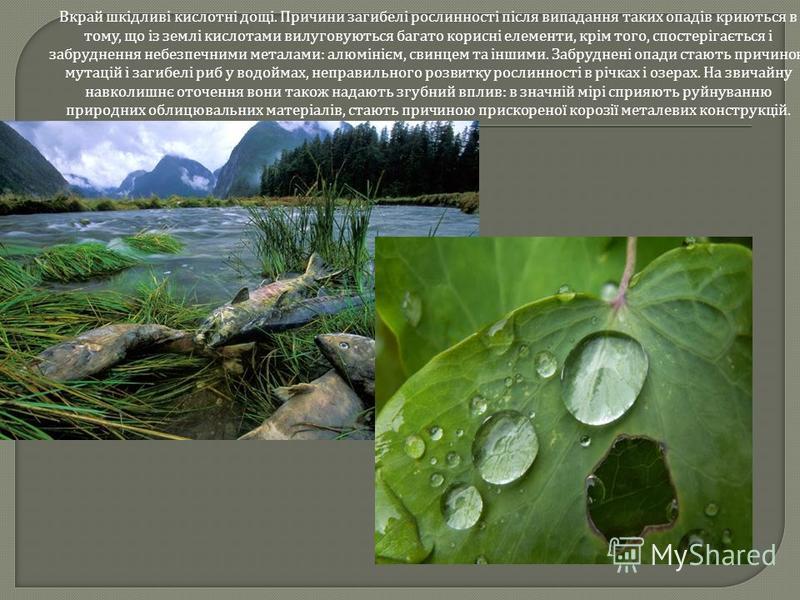 Вкрай шкідливі кислотні дощі. Причини загибелі рослинності після випадання таких опадів криються в тому, що із землі кислотами вилуговуються багато корисні елементи, крім того, спостерігається і забруднення небезпечними металами : алюмінієм, свинцем