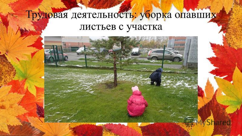 Трудовая деятельность: уборка опавших листьев с участка