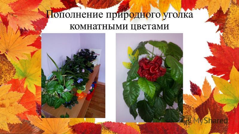 Пополнение природного уголка комнатными цветами