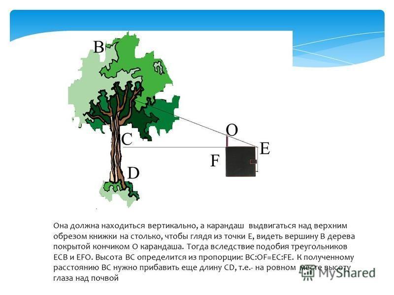 Она должна находиться вертикально, а карандаш выдвигаться над верхним обрезом книжки на столько, чтобы глядя из точки Е, видеть вершину В дерева покрытой кончиком О карандаша. Тогда вследствие подобия треугольников ЕСВ и ЕFО. Высота ВС определится из