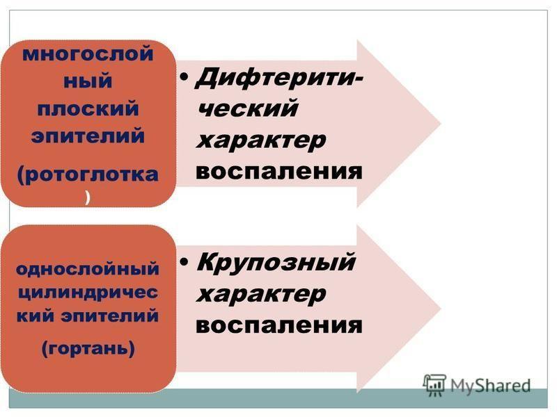 Дифтерити- чешский характер воспаления многослойный плоский эпителий (ротоглотка ) Крупозный характер воспаления однослойный цилиндрический эпителий (гортань)