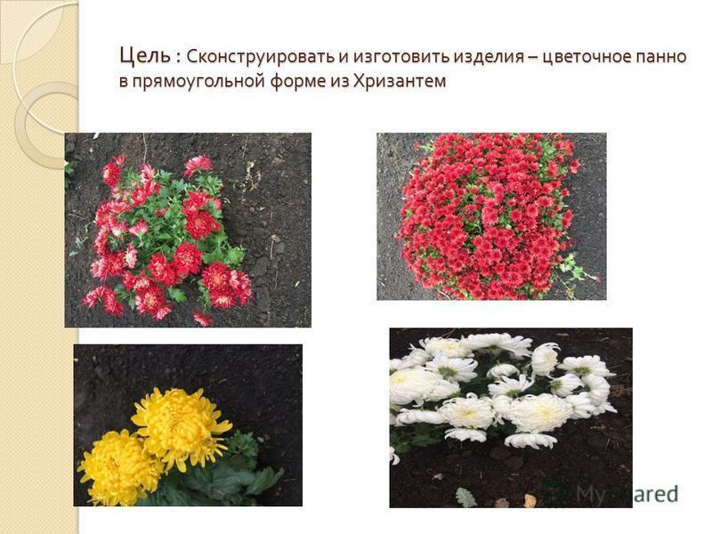 Цель : Сконструировать и изготовить изделия – цветочное панно в прямоугольной форме из Хризантем