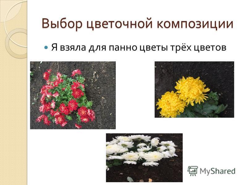Выбор цветочной композиции Я взяла для панно цветы трёх цветов