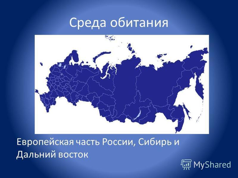 Среда обитания Европейская часть России, Сибирь и Дальний восток