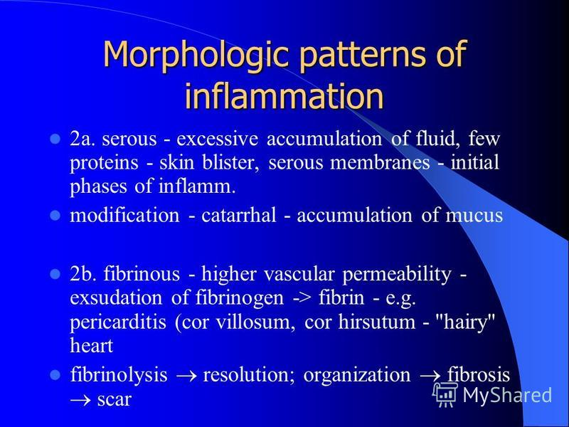 Morphologic patterns of inflammation 2a. serous - excessive accumulation of fluid, few proteins - skin blister, serous membranes - initial phases of inflamm. modification - catarrhal - accumulation of mucus 2b. fibrinous - higher vascular permeabilit