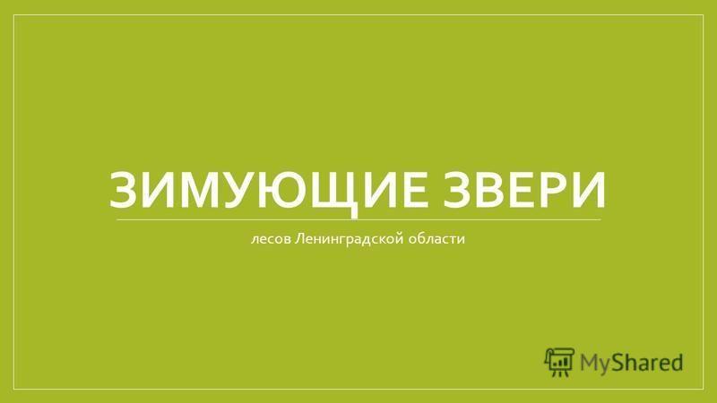 ЗИМУЮЩИЕ ЗВЕРИ лесов Ленинградской области