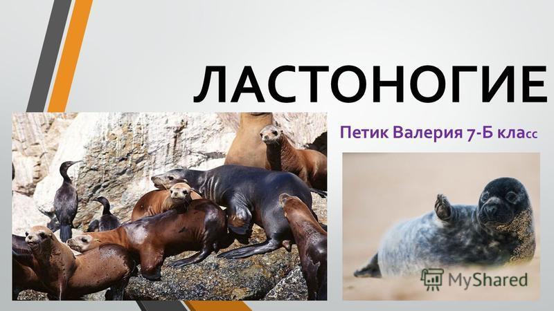 ЛАСТОНОГИЕ Петик Валерия 7-Б кла сс