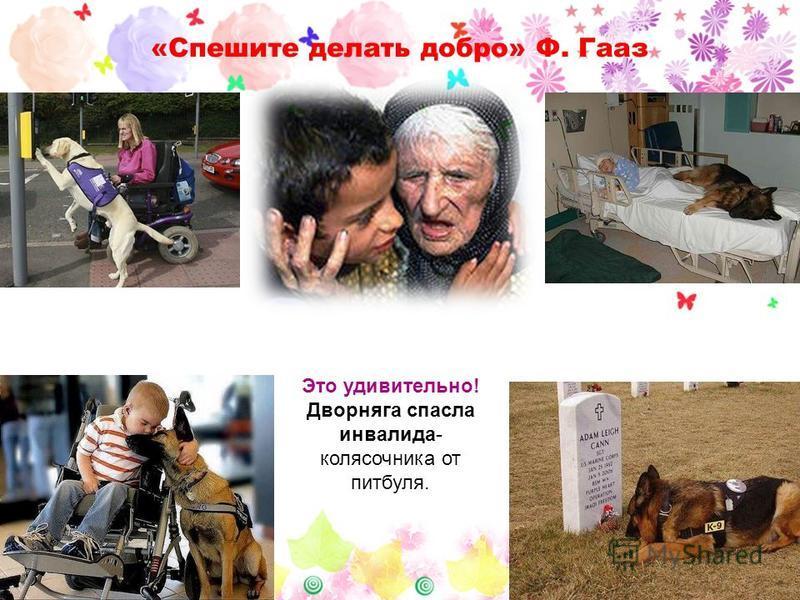 «Спешите делать добро» Ф. Гааз Это удивительно! Дворняга спасла инвалида- колясочника от питбуля.