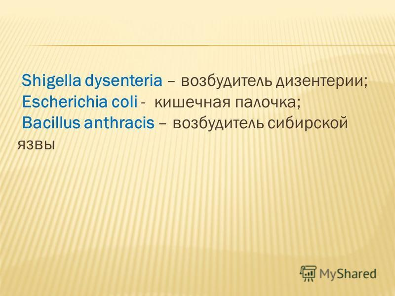 Shigella dysenteria – возбудитель дизентерии; Escherichia coli - кишечная палочка; Bacillus anthracis – возбудитель сибирской язвы