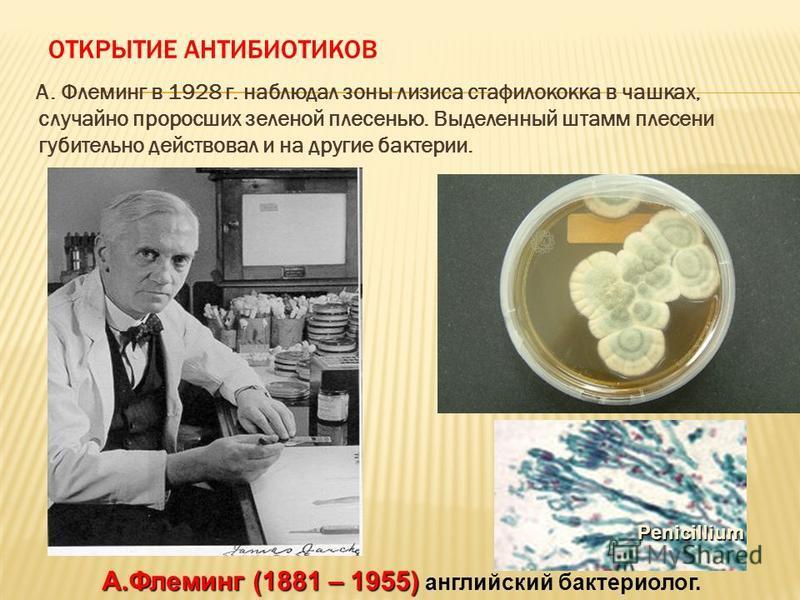 ОТКРЫТИЕ АНТИБИОТИКОВ А. Флеминг в 1928 г. наблюдал зоны лизиса стафилококка в чашках, случайно проросших зеленой плесенью. Выделенный штамм плесени губительно действовал и на другие бактерии. А.Флеминг (1881 – 1955) А.Флеминг (1881 – 1955) английски