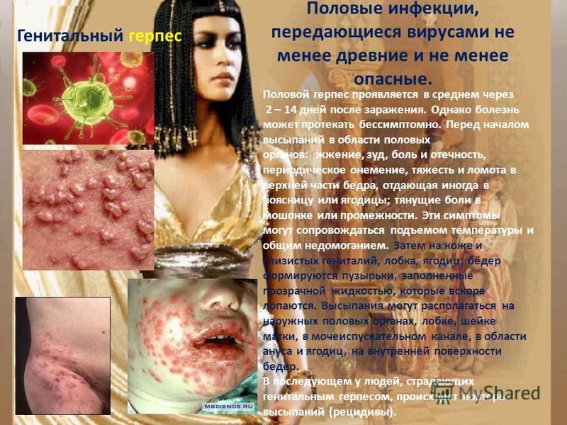 Половые инфекции, передающиеся вирусами не менее древние и не менее опасные. Генитальный герпес Половой герпес проявляется в среднем через 2 – 14 дней после заражения. Однако болезнь может протекать бессимптомно. Перед началом высыпаний в области пол