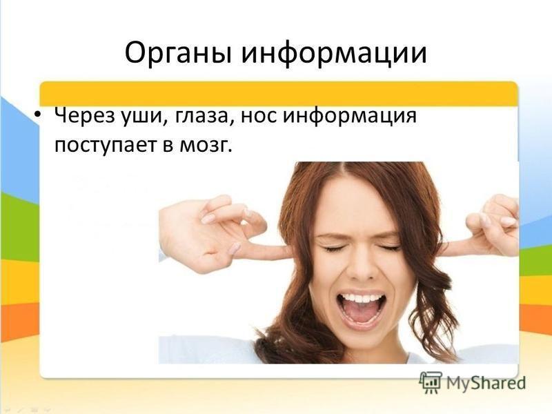 Органы информации Через уши, глаза, нос информация поступает в мозг.