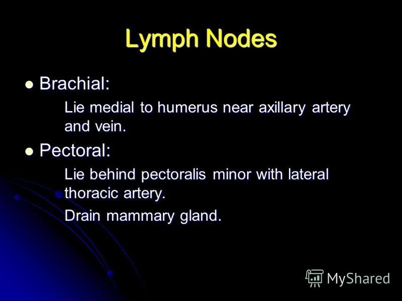 Lymph Nodes Brachial: Brachial: Lie medial to humerus near axillary artery and vein. Pectoral: Pectoral: Lie behind pectoralis minor with lateral thoracic artery. Drain mammary gland.