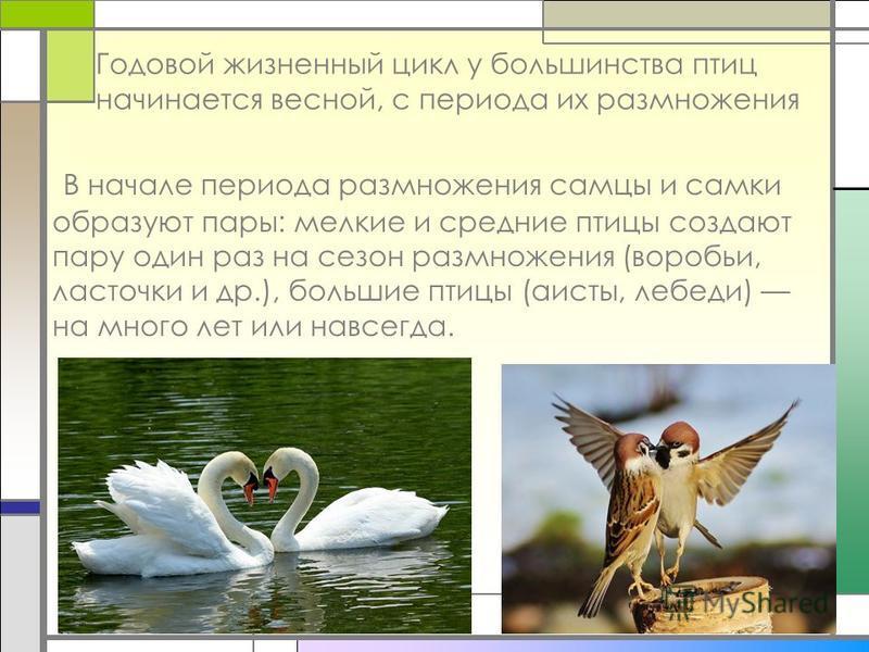 Годовой жизненный цикл у большинства птиц начинается весной, с периода их размножения В начале периода размножения самцы и самки образуют пары: мелкие и средние птицы создают пару один раз на сезон размножения (воробьи, ласточки и др.), большие птицы